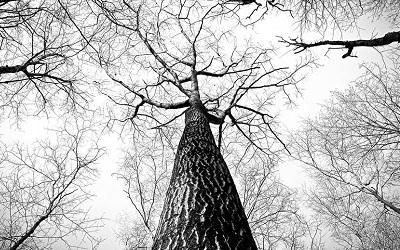 Zdjęcie: drzewo